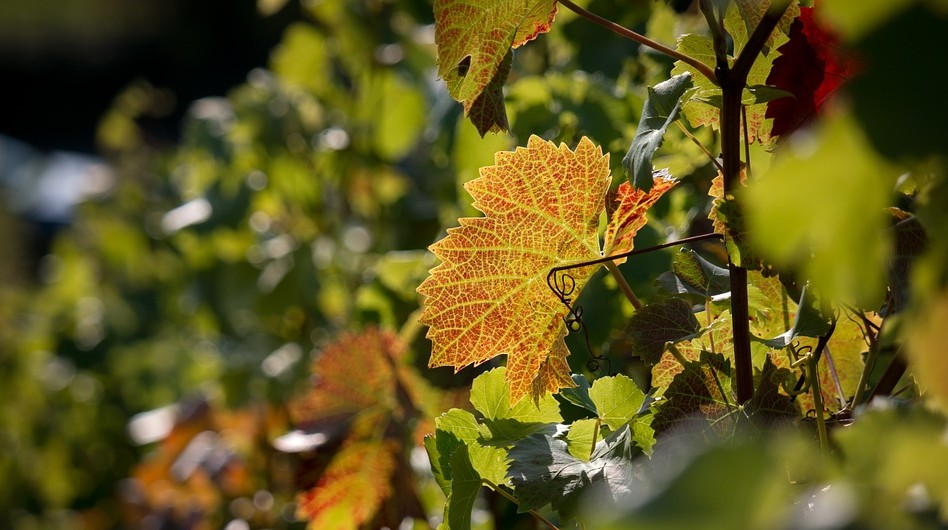Investir-vin-forêt-défiscalisation-rurale